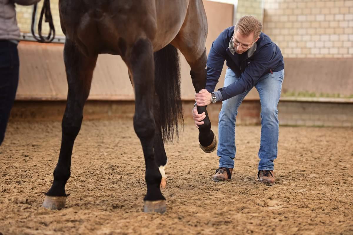 Lars Teigeler - Osteopathie für Pferde und Hunde NRW: Behandlungsszene Pferd wird am Hinterbein behandelt