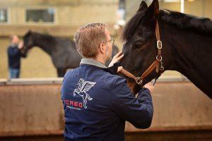 Lars Teigeler - Osteopathie für Pferde und Hunde NRW: Behandlungsszene Pferd wird am Kopf behandelt